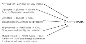 ATP - Energy